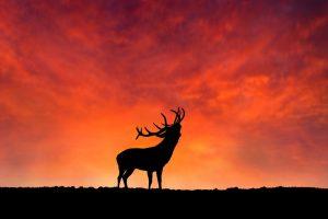 La Berrea del Ciervo en Cazorla